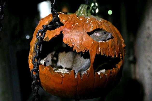 Top 5 Halloween Ideas NH Seacoast
