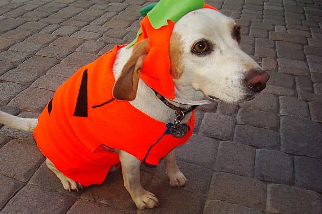 pumpkin-costume
